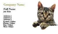 Pet Grooming Kitten Business Card Template